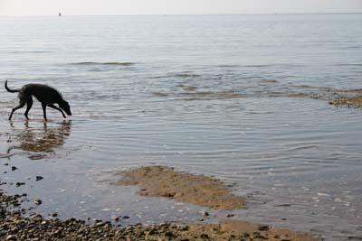 tilda-paddling.jpg