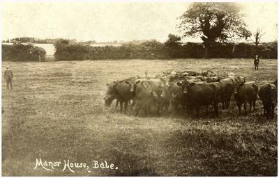 cattle-on-the-meadow.jpg