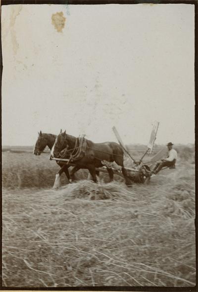 harvesting-with-sail-reaper.jpg