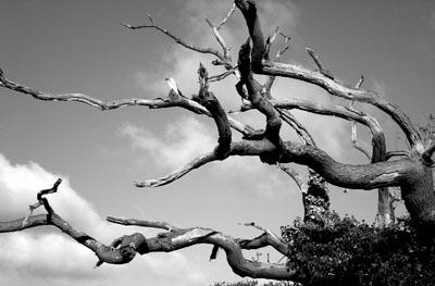 dead-tree.jpg