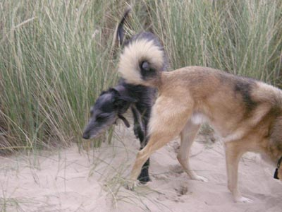 dogs-in-the-dunes.jpg