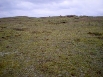 lichen-surface.jpg