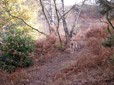 salinwoods.jpg