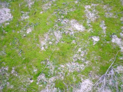 dune-moss.jpg