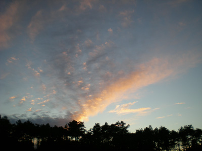 evening-sky-and-pines.jpg
