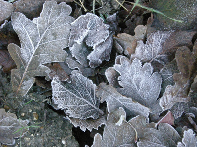 leaves-smaller.jpg