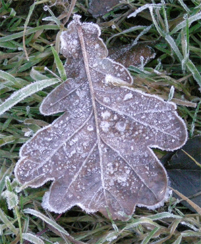 oak-leaf.jpg