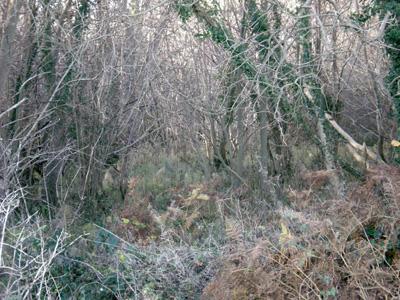 wild-ferny-woods-smaller.jpg