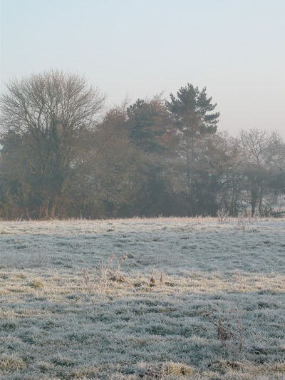 frosty-paddock.jpg