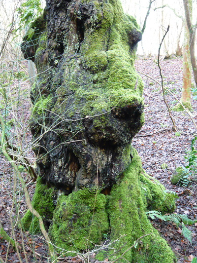 mossy-tree.jpg