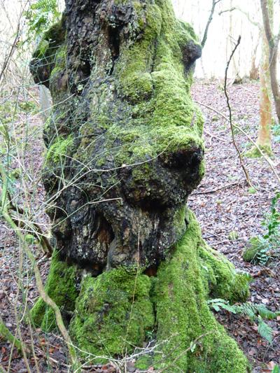 mossy-tree.jpg