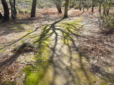 tree-shadow.jpg