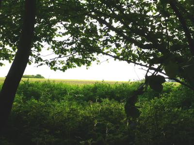 deersview.jpg