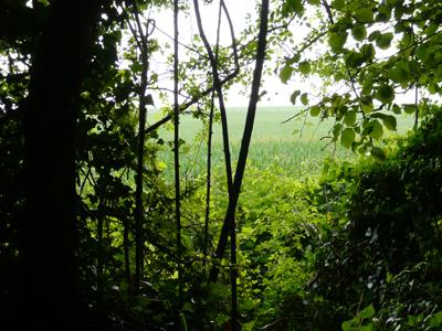 green-view.jpg