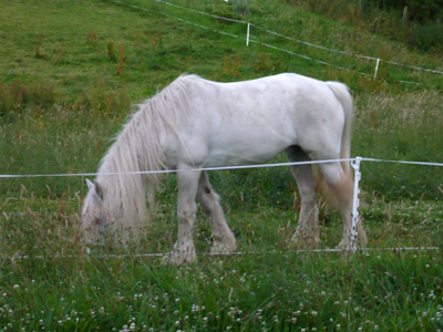 ghost-horse.jpg