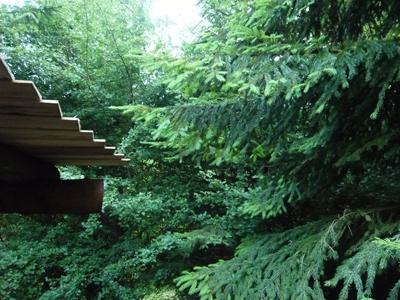 sprucebranches.jpg