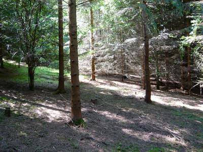 wood-slope.jpg