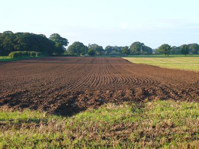 ploughed-stubble.jpg