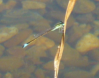 damsel-fly-closeup.jpg
