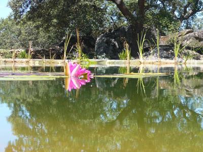 swimmers-view-waterlily.jpg