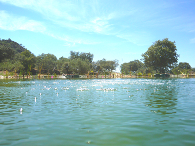 swimmers-view.jpg