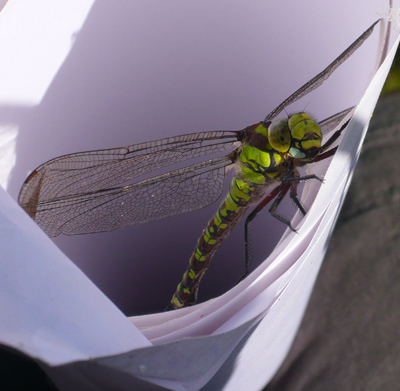 dragonfly-close-up.jpg
