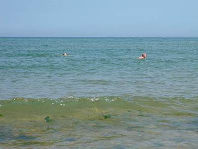 pa-swimming.jpg
