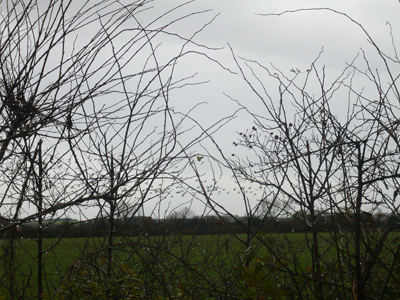 a-view-of-geese-through-the-hedge.jpg