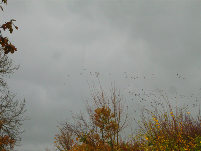 another-view-of-geese.jpg