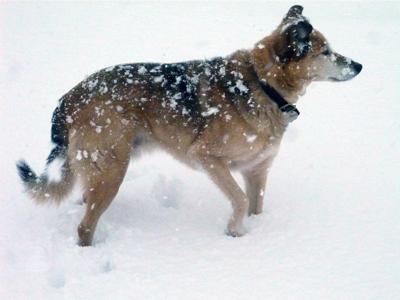 a-snow-dog.jpg