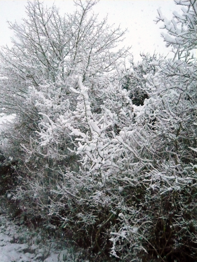 a-snowy-blackthorn.jpg