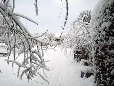 a-snowy-garden.jpg