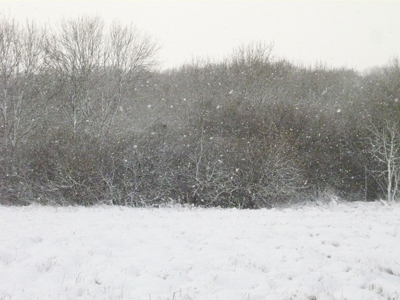 a-snowy-meadow.jpg