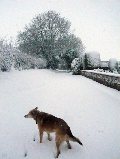 a-snowy-scene.jpg