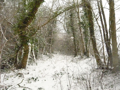 a-snowy-wood.jpg