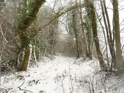 a-snowy-wood.jpg