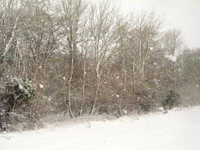 a-snowy-woodshore.jpg
