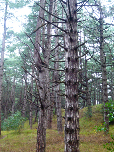 a-tree-trunk.jpg