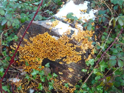 amazing-frilly-fungus.jpg