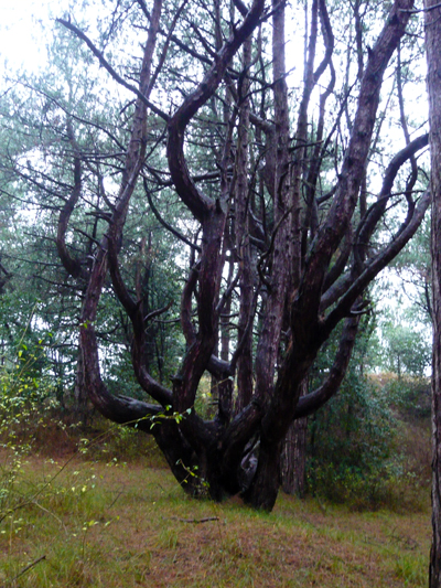 another-huge-tree.jpg