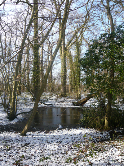 0-snowywood-with-pond.jpg