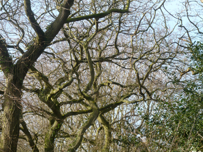 01-crazy-branches.jpg