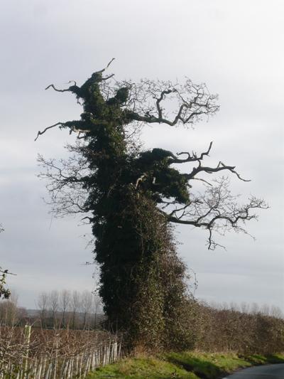 01-old-oak.jpg