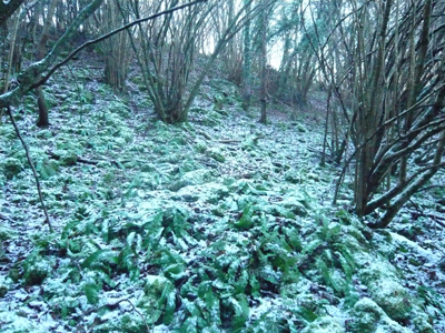 a-frosty-slope.jpg
