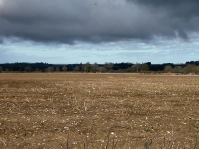 00acrossthe-beet-field.jpg