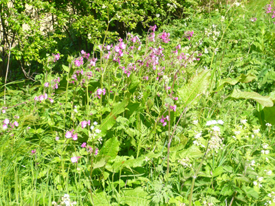 10pinkflowers.jpg