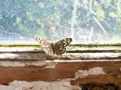1woodbutterfly.jpg