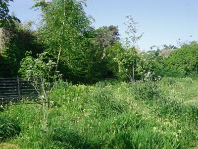 4-garden.jpg