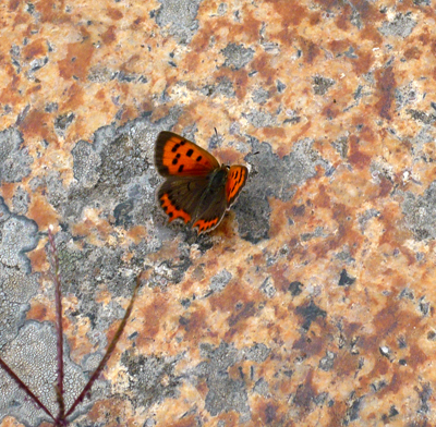 camino-small-copper.jpg