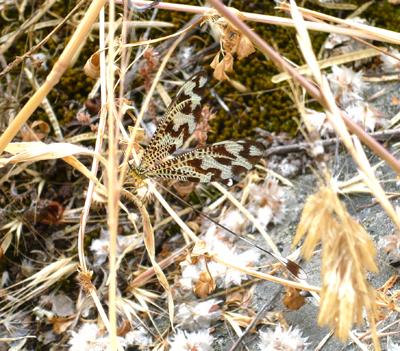 camino-strange-insect.jpg